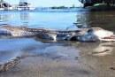 پیدا شدن هیولای عظیم الجثه در سواحل استرالیا